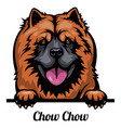 head chow chow - dog breed color image a dogs vector image vector image