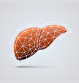 liver sign medical object vector image vector image