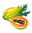 papaya isolated on white background vector image