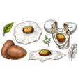 eggs and scrambled omelette farm product vector image vector image