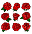 set of gorgeous red roses bud of gorgeous garden vector image