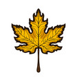 autumn maple leaf hand drawn colored sketch vector image vector image