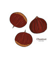 chestnut drawing engraving ink line art vector image