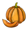 colorful sketch of pumpkin vector image vector image