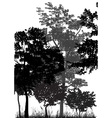 forest vector image vector image