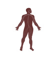 Male Human Anatomy Nervous System vector image