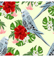 seamless texture budgerigar on a bouquet vector image vector image