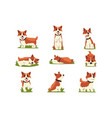 set of cartoon red-haired corgi dogs vector image vector image
