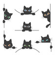 spy cat collection vector image