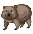 Wild wombat on white background vector image