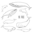 set of different whales vector image
