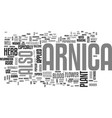 arnica text word cloud concept vector image vector image