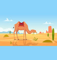 desert background african landscape with group of vector image vector image