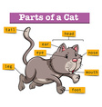 Diagram showing parts of cat vector image vector image