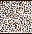 exotic leopard print seamless pattern on white vector image vector image