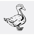 Hand-drawn pencil graphics goose Engraving vector image