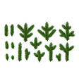 set pine fir green branches spruce branches vector image vector image
