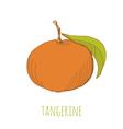 Tangerine vector image