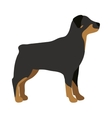 Angry flat dog pet and dog vector image vector image
