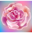 flower rose blossom bloom floral background summer vector image