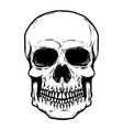 hand drawn human skull isolated on white vector image vector image