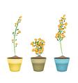 Yellow Padauk Flower in Ceramic Flower Pots vector image vector image