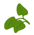 green leaves on plant vector image vector image