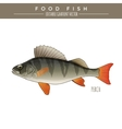 Perch Food Fish vector image