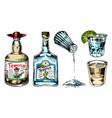 tequila bottles and salt shaker glass shots vector image vector image