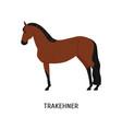 trakehner horse flat elegant vector image