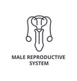 male reproductive system thin line icon sign vector image vector image