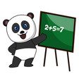 panda doing math on white background vector image vector image