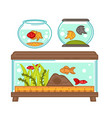 aquariums set with flora and fauna in glass vector image