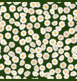 chamomile seamless pattern daisies on green vector image