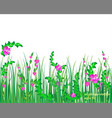 Grass nature flowers vector image