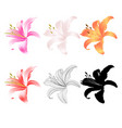 lily pink white yellow red outline and silhouette vector image vector image