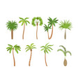 palm tree brazil hawaii exotic plants with vector image