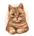 cat color graphic artistic drawing vector image vector image