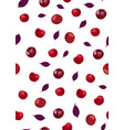 cherry fruits seamless pattern with red violet vector image