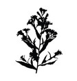 wild flower silhouette isolated on white vector image vector image