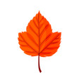 autumn leaf autumn red leaf isolated on a whit vector image vector image