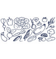 set hand drawing black and white vegetables vector image