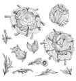 Sketch Floral Design Elements vector image vector image