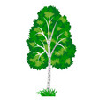birch tree isolated on white background vector image vector image