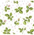 elegant rose seamless pattern vector image