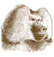 engraving drawing of baboon head vector image vector image
