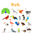 flat style set birds vector image vector image