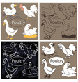 Poultry on dark background vector image vector image