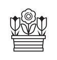 spring tulip flower pot line art icon vector image