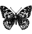 butterfly pyrameis cardui vector image